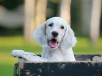 Puppies ! Puppies ! Puppies !