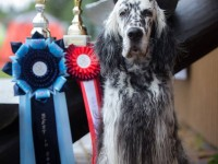 18.06: Results from Vanamõisa National Dog Show