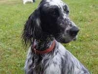 24.05.14: Arya on Saaremaa kauneim koer!